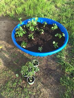 Cheap garden idea!! Kiddie pool vegetable garden. Drill holes in the bottom and sides, fill with soil, and plant! I chose the plants with the biodegradable pots to make the planting even easier!! The pool was $15, the soil was $7 a bag and I used 2. That means this takes a whopping $29 to make. Plant, water, fertilize, and watch your food grow!