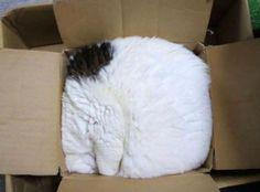 12 fotos que provam que gatos conseguem dormir em qualquer lugar