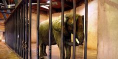 MOVE BUFFALO ZOO ELEPHANTS TO BIGGER HABITAT AND WARMER CLIMATE NOW The Buffalo Zoo was just ranked 6th worst zoo for elephants in the U.S. Help send these elephants to a warmer, better habitat! (11076 signatures on petition)