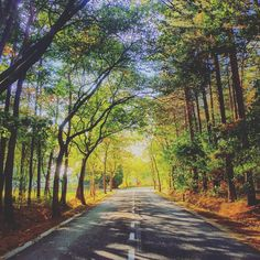 Always on the road to your true self    #nature #tagsforlikes #sky #sun #summer #road #beautiful #pretty #trekking #hiking #blue #travel #meditation #yoga #trees #beauty #light #cloudporn #photooftheday #love #green #skylovers #YogaLove #weather #day #iphonesia #mothernature