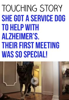 Such a touching story of an owner meeting its new service dog for the first time. #dogs #pets