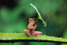A frog hiding from the rain.