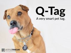 Q-Tag: The World's Best Pet Tag - AnimalRescue.com project video thumbnail