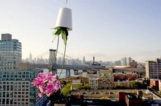 Creative Home Decorating with Flowers and Plants, Sky Planter Design Idea from Boskke
