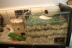 Right deep substrate burrowing area Hamster cages Cool Hamster Cages, Gerbil Cages, Hamster Habitat, Hamster Life, Syrian Hamster, Hamster Stuff, Pet Mice, Pet Rats, Chinchillas