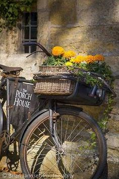 marigolds in bike basket