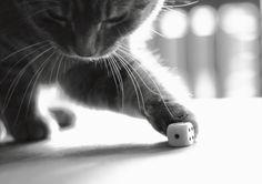 Katze mit Würfel | Flickr - Photo Sharing!