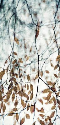 Thea Schrack - photo/encaustic painting by ernestine All Nature, Encaustic Painting, Painting Art, Belle Photo, Autumn Leaves, Printmaking, Art Photography, Fine Art, Drawings