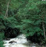 Los bosques riparios de la montaña, de gran importancia para la conservación del recurso hídrico, son una fuente de alimento para la fauna.