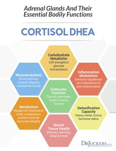 Too much cortisol is a bad thing. Learn how to balance cortisol levels so you can overcome stress and grow stronger as a result. Adrenal Fatigue Treatment, Fatigue Causes, Adrenal Fatigue Symptoms, Adrenal Glands, Adrenal Stress, Bioidentische Hormone, Hormone Imbalance, High Cortisol Symptoms, Chronic Stress