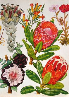 vintage flower illustrations!