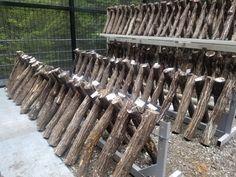 ☆東宝苑よりお知らせ☆  昨年のゴールデンウィークに原木しいたけの菌打ち体験に参加して頂いた方に 順次メールを送らせていただきます。  只今、東宝苑では来年の秋に向けて新しい原木に菌打ちをしております。... 詳しくは http://touhouen-isigama.com/72269/?p=5&fwType=pin