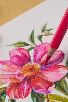 Professional Watercolor Pencils - Set of 72 Watercolour Drawings, Watercolor Pencils, Watercolor Flowers, Pencil Drawings, Colour Pencil Shading, Color Pencil Art, Pencil Painting, Painting & Drawing, Lotus Art