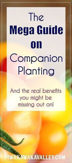 ion planting chart for vegetables - the real benefits to growing plants together in the vegetable garden. Companion planting guide, Vegetable , Garden Planting, Organic gardening, Plants, #gardening #vegetablegarden Garden, gardening, permaculture, cover crops, Vegetable gardening, Veggie gardens Farming farming, Farm date, Permaculture design, mulching, mulch, self sufficient, Potager garden Landscaping, Backyard ideas, Permaculture, Aquaponics, Balconies, Compost, get started