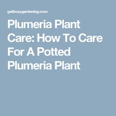 Plumeria Plant Care: How To Care For A Potted Plumeria Plant
