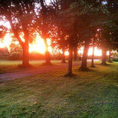 Evening sun, in my garden / Ann-Sofi Sweden