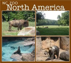 NC Zoo Review