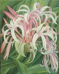 A cultivated Crinum, painted in Borneo  by Marianne North  Location: Borneo  Plants: Crinum, Crinum augustum  (C) Kew Gardens, London  http://www.kew.org/mng/gallery/plant-portraits
