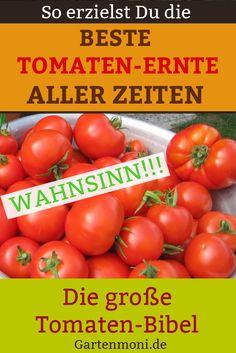 Die große Tomaten Bibel – Online Kurs inklusive liebevoll zusammenbestelltem Anzuchtset und persönlichem E-Mail Support.  So erzielst Du die geschmackvollste und reichhaltigste Tomatenernte aus eigenem biologischen Anbau!
