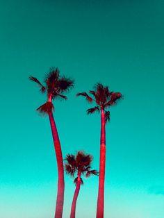 RED PALMS. MULETA Photo: Kate Bellm