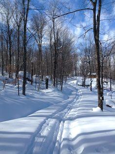 Lake Ozonia winter woods Snow Photography, Winter Wonderland, Paths, Fields, Woods, Scenery, Walking, Nature, Painting