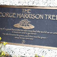 BUGGIN: George Harrison Memorial Tree KILLED By Beetles