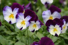 I 5 fiori da piantare a settembre - DeAbyDay.tv