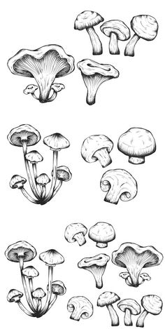 hippie painting ideas 323907398201281651 - Mushrooms hand drawn set isolated Source by agehanya Mushroom Drawing, Mushroom Art, Art Drawings Sketches, Tattoo Drawings, Tattoo Sketches, Mushroom Tattoos, Arte Sketchbook, Pen Art, Art Inspo