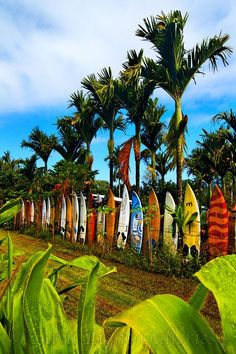 Maui's famous Surfboard fence just after a rain.