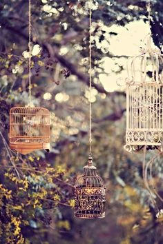 Trio of birdcages hung from tree branches.