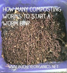What are the ideal number of composting worms to start your worm bin. Hydroponic Gardening, Hydroponics, Vegetable Gardening, Worm Facts, Worm Farm Diy, Earthworm Farm, Red Wiggler Worms, Red Wigglers, Worm Castings
