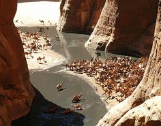 Chad. Camels in the Guelta d'Archei, Borkou-Ennedi-Tibesti // by menasce. Photographer's note: Guelta d'Archei is  in the Ennedi mountain range, near the border with Sudan. This barren canyon holds an ancient reservoir of surface water which is unique in the Sahara desert.