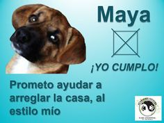 FUNDACION VIVATMA: Maya SI cumple!!! Maya, Dogs, Animals, Meet, Animales, Animaux, Pet Dogs, Doggies, Animal