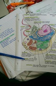 Image de biology, study, and notes
