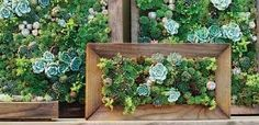 Large Succulent Wall Art Module Kit, Design Your Own, 15 X 12 Inches, 25…