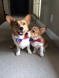 Patriotic pals