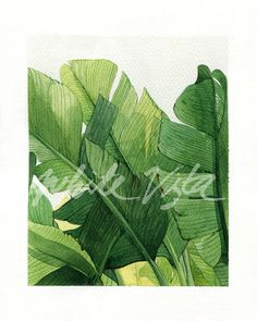 Tropical leaves illustration 02 water color art by WhiteVista