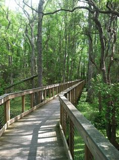 PCB Conservation Park | Community Post: 10 Things You Don't Know About Panama City Beach
