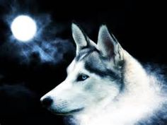 ... wallpapers and high resolution wolf wallpaper wallpapers from all
