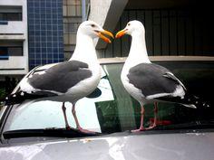 birds on my car