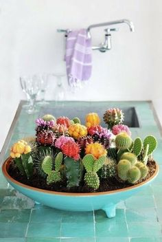 Mother's Day DIY Gift Ideas: 10 Inspiring Succulent & Cactus Gardens #mothersday #gift #ideas