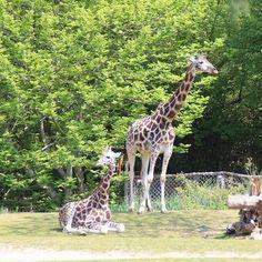 Entspannung :-) #zooschaufenster #leipzig #thisisleipzig #rosental #rosentalpark #zoo #tiere #frühling #spring #momentaufnahme #love
