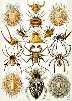 What are arachnids? Are they harmful insects? Read more fun information about Arachnids and see some images and video here: http://easyscienceforkids.com/all-about-arachnids/
