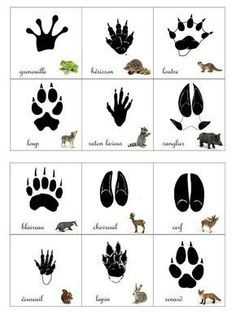 Empreintes animaux de la forêt animals silly animals animal mashups animal printables majestic animals animals and pets funny hilarious animal Animal Activities, Montessori Activities, Activities For Kids, Shiro Anime, Animals Tattoo, Animal Footprints, Animal Tracks, Forest School, Forest Animals