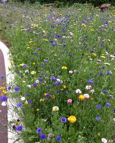 Wild flower garden - university of Leeds