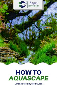 Aquascaping takes quite a few steps but in this article, I'm going to break it down into a step by step guide and make it easy for everyone. Turtle Aquarium, Diy Aquarium, Planted Aquarium, Aquarium Ideas, Freshwater Aquarium Plants, Freshwater Fish, Colorful Fish, Tropical Fish, Australian Rainbow Fish