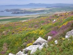 Beautiful scenic view in Pembrokeshire Pembrokeshire Coast Path, Pembrokeshire Wales, Beautiful Places In The World, Amazing Places, You Are The World, Get Outdoors, Travel Memories, Future Travel, Natural Wonders