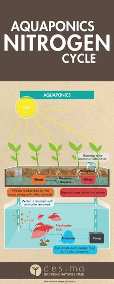 Aquponics is easy, don't be put of by this complex infographic.    Share this infographic on your site.  Infographic by & #homeaquaponics