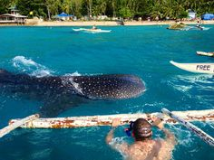 Swim with Whale Sharks in Oslob (Cebu, Philippines). Check!