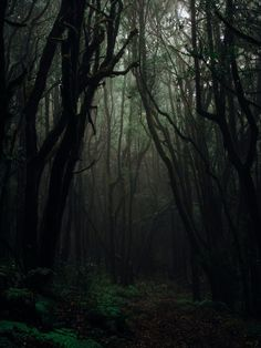 """Damn right I'm pretty!""  ""Sirius. He called you petty"".    Sirius Bl… #fanfiction # Fan-Fiction # amreading # books # wattpad Dark Green Aesthetic, Nature Aesthetic, Aesthetic Light, Fantasy Forest, Dark Fantasy, Johanna Basford Enchanted Forest, Theme Nature, Night Forest, Foggy Forest"